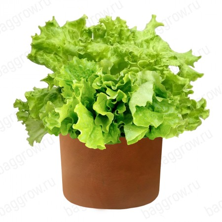 Гроубэг для салата и зелени M