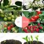 Данный фитосветильник можно использовать для любых растений на всех стадиях развития.